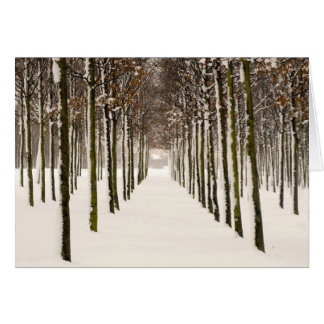 Rows of trees card