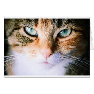 Roxie the cat card
