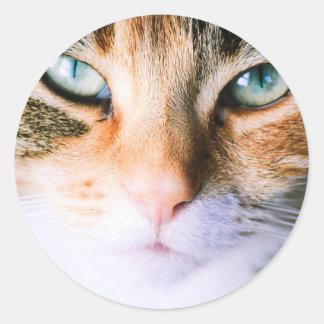 Roxie the cat classic round sticker