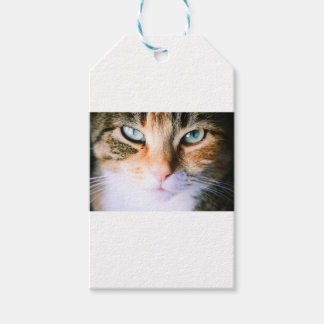 Roxie the cat gift tags