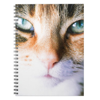 Roxie the cat notebook