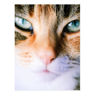 Roxie the cat postcard