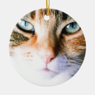 Roxie the cat round ceramic decoration