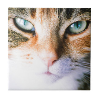 Roxie the cat small square tile