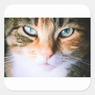 Roxie the cat square sticker