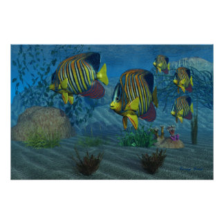 Royal Angelfish Print