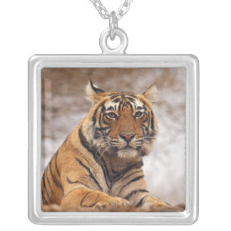 Royal Bengal Tiger - a close up, Ranthambhor 2 Square Pendant Necklace