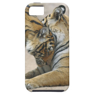 Royal Bengal Tiger and young ones - touching iPhone 5 Case