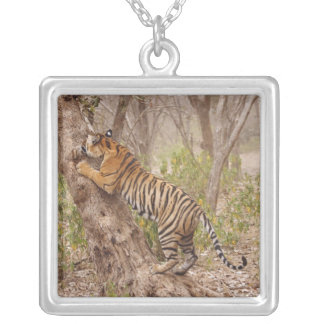 Royal Bengal Tiger climbing up the tree, Square Pendant Necklace