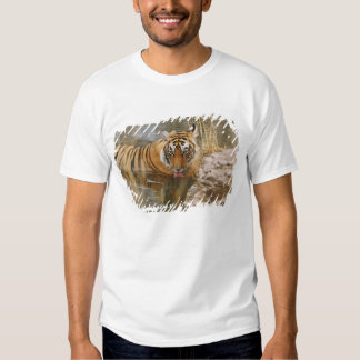 Royal Bengal Tiger drinking in the forest Tee Shirt