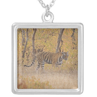 Royal Bengal Tiger in the forest, Ranthambhor Square Pendant Necklace