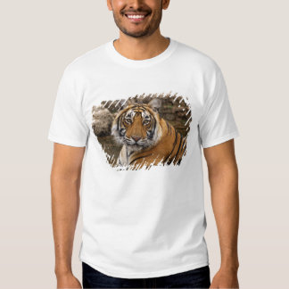Royal Bengal Tiger in the jungle pond, Tee Shirt