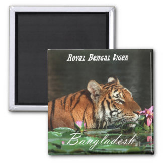 Royal Bengal Tiger Magnet