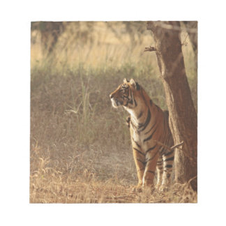 Royal Bengal Tiger on look out for prey, Notepad