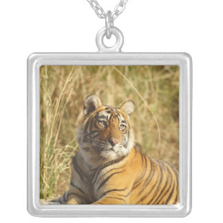 Royal Bengal Tiger outside the grassland, Square Pendant Necklace