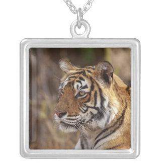 Royal Bengal Tiger, Ranthambhor National Park, 2 Square Pendant Necklace