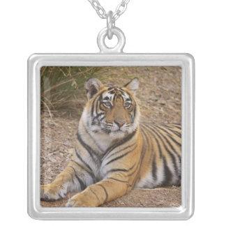 Royal Bengal Tiger sitting outside grassland, 3 Square Pendant Necklace