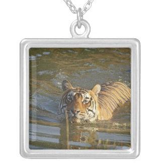 Royal Bengal Tiger swiming, Ranthambhor Square Pendant Necklace
