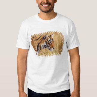 Royal Bengal Tiger watching from the 2 Shirt