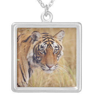 Royal Bengal Tiger watching from the Silver Plated Necklace