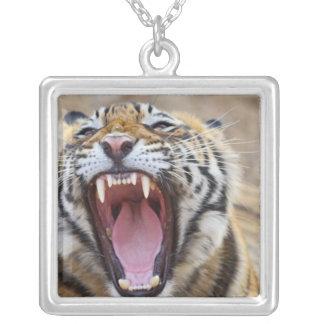 Royal Bengal Tiger yawning; Ranthambhor Square Pendant Necklace