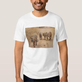 Royal Bengal Tigers on the track, Ranthambhor 8 T-shirt