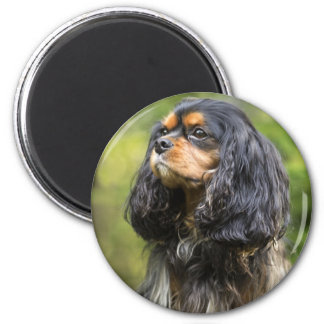 Royal Cavalier King Charles Spaniel 6 Cm Round Magnet