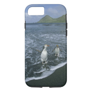Royal Penguin, (Eudyptes schlegeli), returning iPhone 7 Case