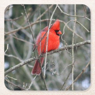 Royal Red Cardinal Paper Coasters