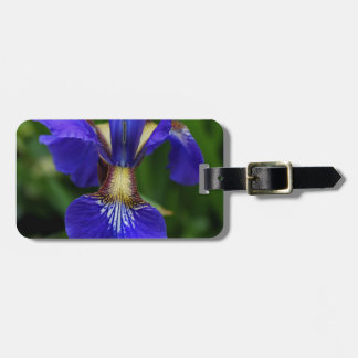 Royal Rhapsody Luggage Tag