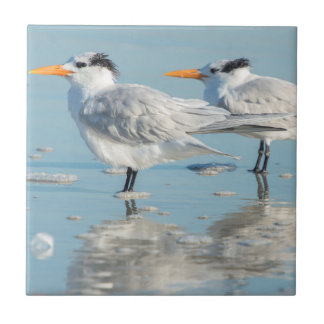 Royal Terns on beach Small Square Tile