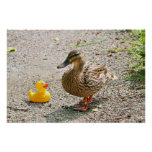 Rubber Duck and Mother Duck