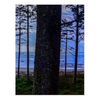 Ruby Beach sea shore Postcard