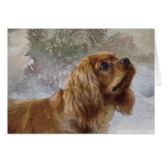 Ruby Cavalier Christmas Card