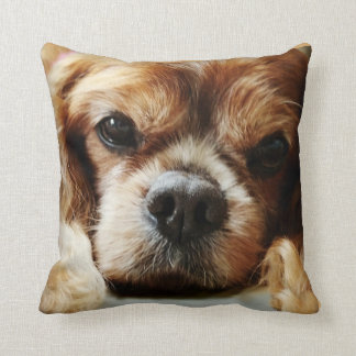 Ruby Cavalier Pillow 16x16