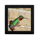Ruby Green hummingbird