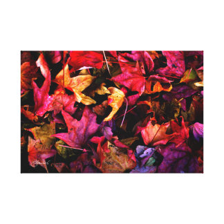 Ruby Red Autumn Leaves Canvas Print