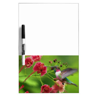 Ruby Throat-1 Hummingbird Dry Erase Board Message
