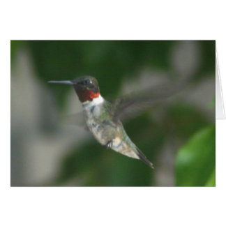 Ruby Throat Hummingbird Card