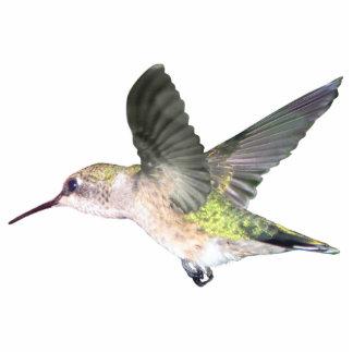 Ruby-throated Hummingbird 2x3 Ornament Photo Sculpture Decoration