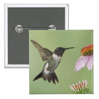 Ruby-throated Hummingbird Archilochus 3 Button