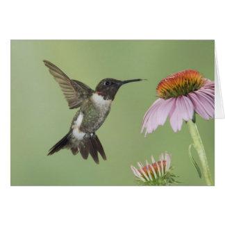 Ruby-throated Hummingbird, Archilochus 3 Greeting Card