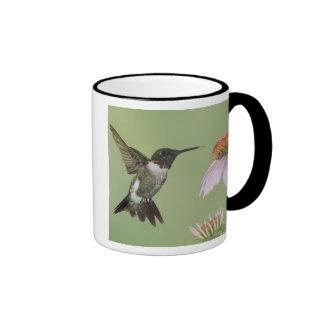 Ruby-throated Hummingbird, Archilochus 3 Ringer Mug
