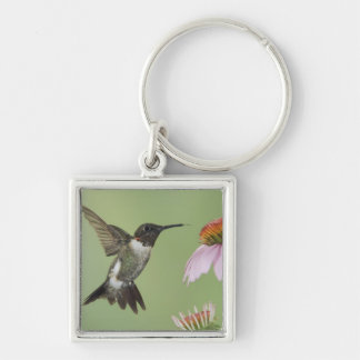 Ruby-throated Hummingbird, Archilochus 3 Silver-Colored Square Key Ring