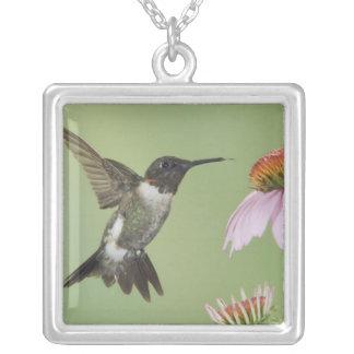 Ruby-throated Hummingbird, Archilochus 3 Square Pendant Necklace