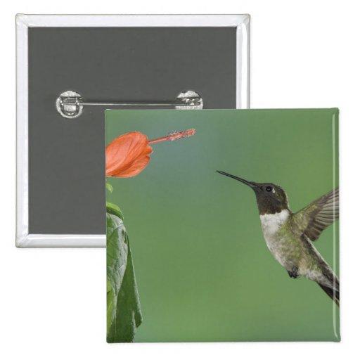 Ruby-throated Hummingbird, Archilochus Pinback Button