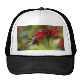 Ruby-Throated Hummingbird Archilochus Colubris Cap