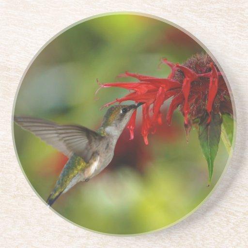 Ruby-Throated Hummingbird Archilochus Colubris Coasters