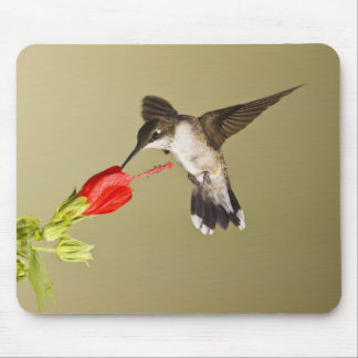 Ruby-throated Hummingbird Archilochus Mouse Pad