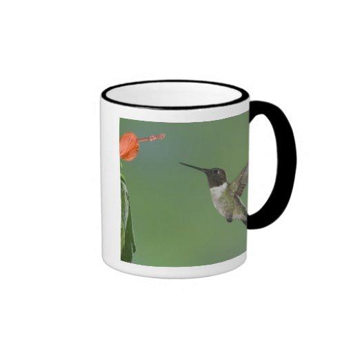Ruby-throated Hummingbird, Archilochus Coffee Mugs